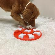 Dog & Cat Smart Plastic